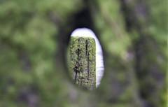 Through the Breakwater (marc_morris1982) Tags: wood uk seaweed beach water canon kent seaside moss hole 1855mm 1855 rotten breakwater seasalter 600d