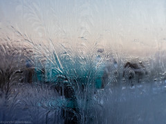 Ice flowers (katrin glaesmann) Tags: christmas iceland december reykjavík windowfrost iceflowers eisblume fernfrost