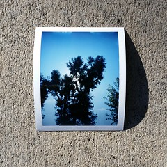 Silloute Trees. (Patrick M Hickey) Tags: film analog vintage polaroid ishootfilm fujifilm landcamera polaroidlandcamera filmisnotdead fp100c polaroid104 fujifilmfp100c ishootpolaroid pealapart polaroid104landcamera