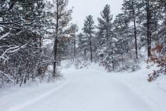 IMG_0283a (markbyzewski) Tags: snow colorado ugly coloradosprings palmerpark