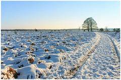 December: let it snow (H. Bos) Tags: winter snow nature weather season landscape december sneeuw natuur oisterwijk brabant sneeuwpret landschap noordbrabant weer snowfun kampina 2014 boxtel seizoen