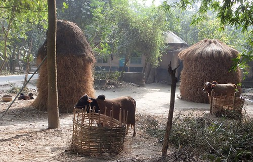 Village farm scene