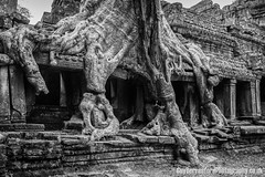 Angkor Wat (GuyBerresfordPhotography.co.uk) Tags: travel tree tourism window stone temple ruins asia cambodia southeastasia khmer buddhist ruin angkorwat tourist bark massive temples blocks root siemreap heavy hindu tombraider impressive indianajones treeroots raidersofthelostark prakhan pragkhan