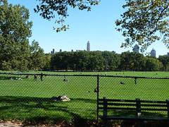Sheep Meadow, Central Park (raels2013) Tags: newyorkcity centralpark sheepmeadow