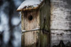 Linnunpönttö / Birdhouse (Tuomo Lindfors) Tags: aulanko hämeenlinna suomi finland niksoftware colorefexpro linnunpönttö birdhouse koivu birch theacademytreealley tamronsp70200f28divcusd