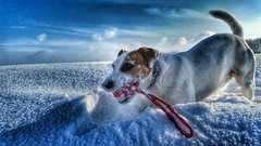 Anton (Oliver Kuehne) Tags: schnee winter dog snow hiver hund anton jackrusselterrier hdr android oliverkuehne samsunggalaxys5