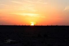 Sunset ( ) Tags: sunset nikon desert saudi saad camels             hessah