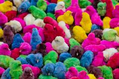 Feira (Suellen 'Suka' Amaral) Tags: color chicken colors feira bahia coloridos pintinhos