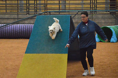 agility263 (jaimekay16) Tags: dog training austin agility k9 xpress nadac k9x