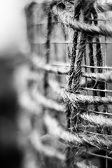 The Old and the New (belleshaw) Tags: blackandwhite detail wire bokeh cage rope protection sandiegobotanicgarden