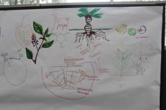 Plant Biology 2016