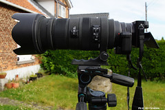 It's ALIVE! Who has seen an A6000 Bigma in the flesh? (Red Cathedral loves Quebec) Tags: a6000 bigma sigma mirrorless alpha alfa sony 50500mm laea4 35mmfullframeamountadapter emount amount 500mm monstrosity apcs