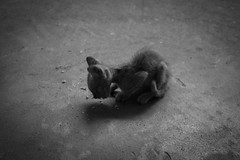 Hungry kitten in Hue (OpersembeArt) Tags: trip bw white black cakes cat canon skinny eos kitten asia village rice south small east tiny hue lanky meloncholy bacpacking 700d canon700d canoneos700d eos700d