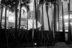 Brisbane - Eagle St (alessandro.soro) Tags: brisbane eagle st australia outdoors monochrome blackandwhite film minolta himatic ilford hp5 palm trees night