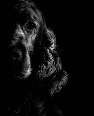 Thank You for the good times my Friend (re-upload) (Kinseri) Tags: portrait bw dog animal canon 50mm blackwhite friend best planet 600d