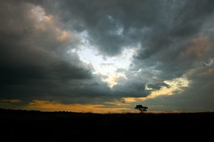 Dark Clouds over a Lonely Tree (Wijnand Kroes Photography) Tags: sunset sky tree clouds landscape veluwe