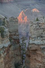 In Between (vcostanz) Tags: inbetween grandcanon grand canon tree grandcanyonnationalpark canyon national park arizona nationalpark between coloradoriver colorado river canon650d usa us americasparks americanwest americanwestatitsbest
