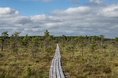 Dunika mire (`TOMS`) Tags: blue trees sky tree green nature clouds 35mm nikon outdoor latvia trail nikkor taka mire liepaja purva kurzeme laipa dunika f18g afsdxnikkor35mmf18g