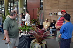 2016-07-23 08781 Orchid Show, SF County Fair Bldg (Dennis Brumm) Tags: sanfrancisco california july 2016 orchids exposition flowers plants bromeliads