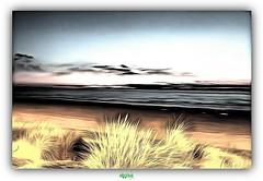 PLAGE DE LEFFRINCKOUCKE (régisa) Tags: digue dike plage beach leffrinckoucke nord mer sea oyat grass beachgrass awhisperinthenoise
