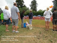 DAT2016_Crowd_1198 (greytoes_99) Tags: agility dat2015 dat2016 event humanesocietytacoma people summer tacoma tacomahs volunteers dog humananimalbond cat lakewood wa us