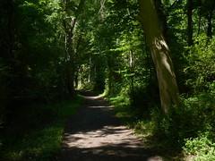 Forest trail (Dendroica cerulea) Tags: forest trees trail path summer americanrevolution revolutionarywar princetonbattlefieldstatepark princeton mercercounty nj newjersey