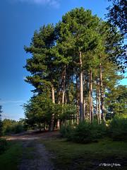 Sutton Park  M8282151_2_3BalSm (Preselector) Tags: suttonpark suttoncoldfield hdr