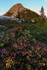 Heather Blooms (deanhebert) Tags: coquihalla mountains wildflowers flowers heather twilight