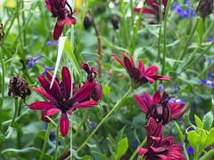 Just Flowers (Ennev) Tags: flower summer montrealtremblant epl5 flowers olympuspen kiron olympus 80200mm microfourthird