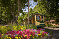 Fort Collins Municipal Railway (Christopher J May) Tags: nikonsb26 sigma1224mmf4556ii nikond600 railway railroad flowers co colorado ftcollins fortcollinsmunicipalrailway trolley birney