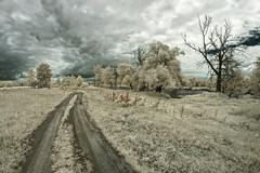 infrared (Bucka Stone) Tags: mierzwice mierzwicestare poland podlaskiprzeombugu polska path ir infrared sky clouds countryside canon trees grass white fisheye samyang buckastone