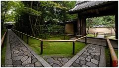The entrance path to Koto-in temple, Kyoto (Damien Douxchamps) Tags: japan  japon kansai  kinki  kyoto   northern north  daitokuji templecomplex temple     koutouin kotoin  zengarden   subtemple  tatchu