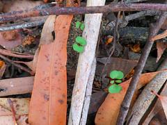 New Life (jo.elphick) Tags: burrill lake nsw australia