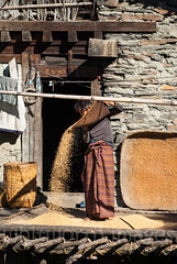 Woman winnowing rice (whitworth images) Tags: stone kira community wooden nabji himalaya mountains himalayas rural ecotourism culture trek rice travel house woven cane farming crop tourism rustic bhutanese winnowing hike korphu bamboo asia lady farmer logs skirt home south hills person nimshong produce agriculture sifting old nymzhong chaff verandah remote basket woman trail bhutan farm isolated village deck traditional