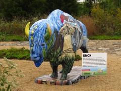 IMG_9852 - Knox County Bi-centennial Bison (John Pohl2011) Tags: sx50hs canonsx50hs pohl scenery canon john