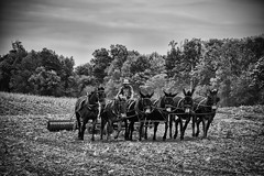 Team Work (Off The Beaten Path Photography) Tags: amish plow work fields harvest farm offthebeatenpath horses horse mules mule farming human humans culture