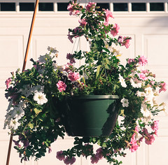 Flower pot (kevin dooley) Tags: 80d flowerpot flower pot hangingbasket