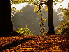 sonniger Herbstspaziergang Okt 2016 - 2 (mohnblume2013) Tags: herbst farben bunt sonne laub wald