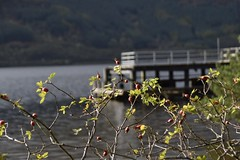 Rowardennan on Loch Lomond (Anne Young2014) Tags: scotspirit scotland lochlomond rowardennan pier