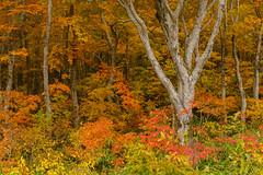 201610173799 (Gansan00) Tags: sony ilce7rm2 japan aomori hakkoda landscape      10