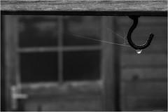 Herbst (Manfred Egyptien) Tags: herbst weis tropfen spinnennetz schwarzweis