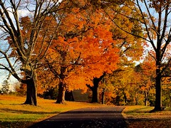 (craigdrezek9) Tags: trees fall autumn newengland conecticut farmington hillstead composition color orange path road foliage