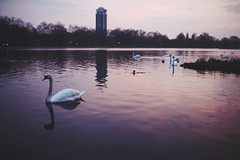 London (Savannah Daras) Tags: park city uk travel sunset england lake london tower nature water birds skyline reflections dark landscape evening swan pond colorful moody afternoon unitedkingdom outdoor wildlife ducks peaceful overcast calm swans hydepark ripples relaxation goldenhour savannahdaras