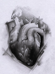 heart drawing (Theodor_tatuaje_bucuresti) Tags: tattoo tatuaje tatuaj salontatuaje