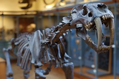 DSC_5477 (AperturePaul) Tags: paris france museum skeleton nikon natural bokeh sabertooth d600