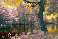 Shakujii-koen Park Scene (aeschylus18917) Tags: park japan landscape ir tokyo nikon scenery surreal infrared  koen d200 nerima nerimaku  shakuji shakujikoen     shakujipark  1424mm danielruyle aeschylus18917 danruyle druyle   shakujiiken