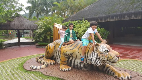 Montados no tigre