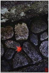 Lone leaf at Ruriko-in's entrance (Damien Douxchamps) Tags: autumn japan stone stairs temple leaf kyoto     kansai japon   kinki    ochiba    rurikoin rurikouin  northernsakyo  hieizanrailways
