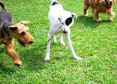 Telo dije... te gane Neelix (Dogs Resort Pereira) Tags: perros mascotas petit guardera entrenamiento pereira perrosjugando juegodeperros razasdeperros perrosfelices dogsresort guarderaparaperros perrosenlapiscina guarderaparaperrosenpereira guarderacampestreparaperrosenpereira hotelcampestreparaperrosenpereira dogsresortpereira fotoscuriosasdeperros clasesparaperros colegioparaperros guarderacampestreparaperros hotelcampestreparaperros miradadeperros entrenamientoparaperros hotelcincoestrellasparaperros entrenandoperros