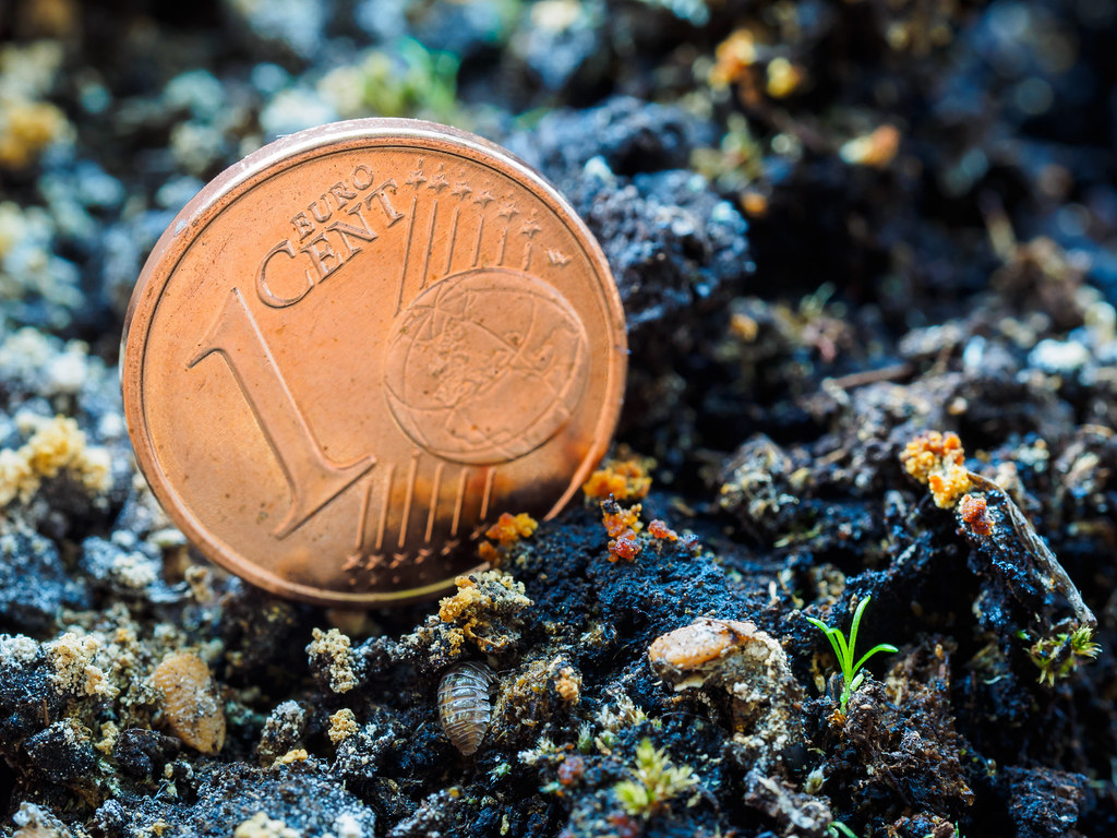 Scale Bill Morisson Tags Money Macro Nature Animal Closeup Bug Insect Moss Coin Earth